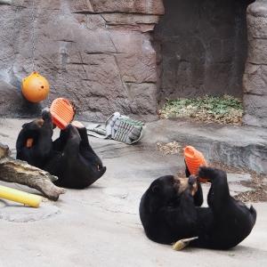 マレーグマ-天王寺湯たんぽおやつを器用に食べる